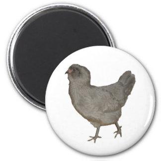 Lavender Ameraucana Rare Breed Hen Refrigerator Magnet