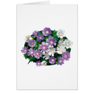 Lavender and White Stokes Asters Cards
