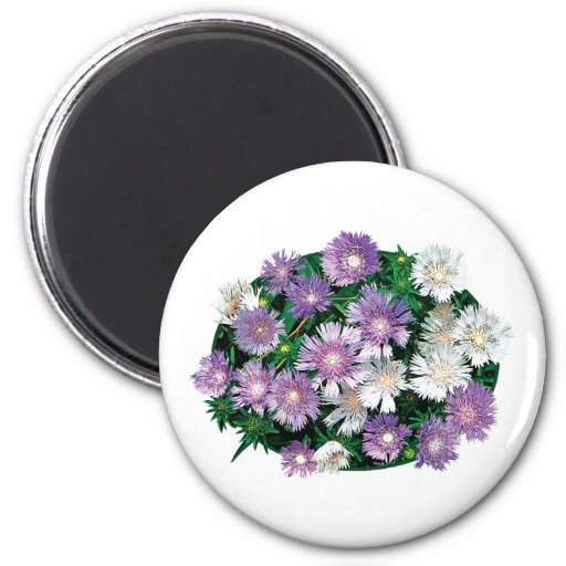 Lavender and White Stokes Asters Refrigerator Magnets