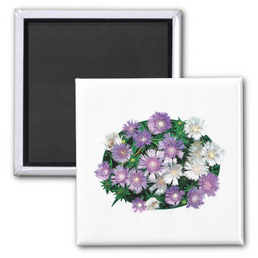 Lavender and White Stokes Asters Fridge Magnet