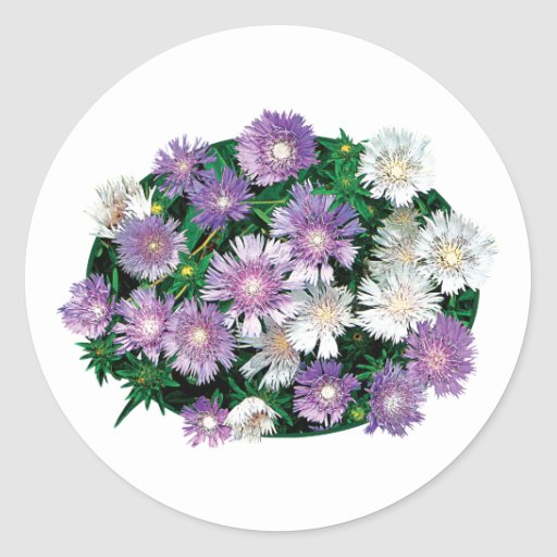 Lavender and White Stokes Asters Round Stickers
