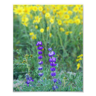 Lavender and Yellow Daisy Photo Print
