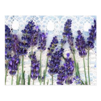 lavender background postcard