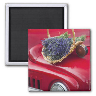 Lavender bunches rest on old farm pickup truck square magnet
