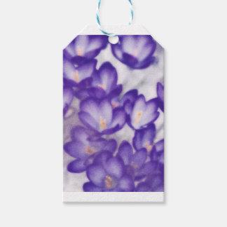 Lavender Crocus Flower Patch