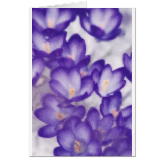 Lavender Crocus Flower Patch Card
