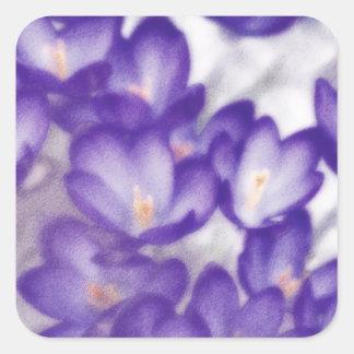 Lavender Crocus Flower Patch Square Sticker