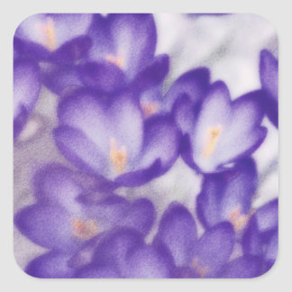 Lavender Crocus Flower Patch Square Sticker