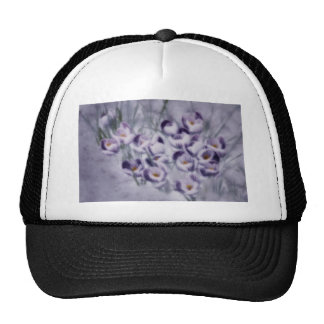Lavender Crocus Patch Cap