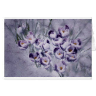 Lavender Crocus Patch Card