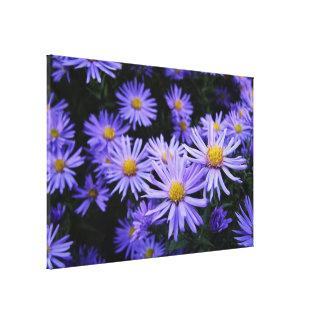 Lavender Daisies Canvas Print