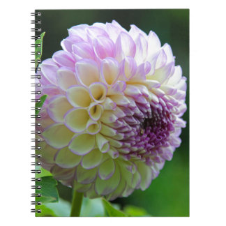 Lavender Eye Spiral Notebooks