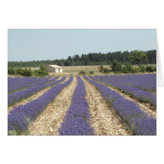 Lavender Field in Provence Card