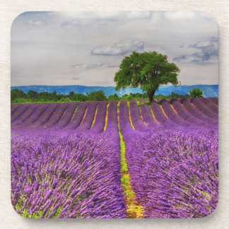 Lavender Field scenic, France Coaster