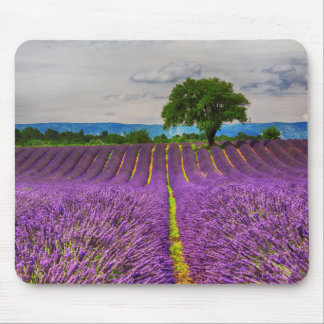 Lavender Field scenic, France Mouse Pad