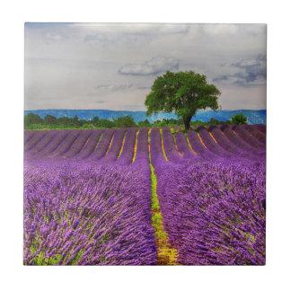 Lavender Field scenic, France Tile