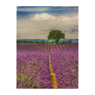 Lavender Field scenic, France Wood Wall Art