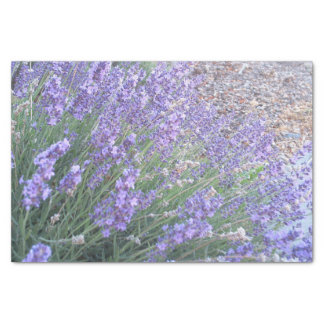 Lavender Flower Tissue Paper   Nature Photography