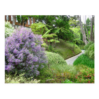 Lavender flowers in New Zealand. Postcard