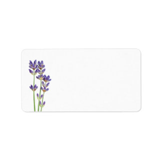 Lavender Flowers Isolated On White Background Label
