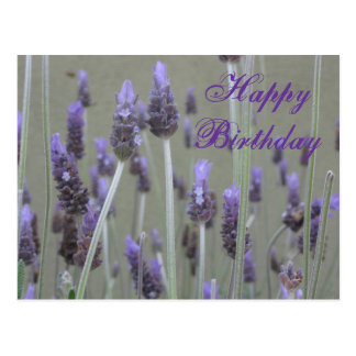 lavender  Happy Birthday Postcard
