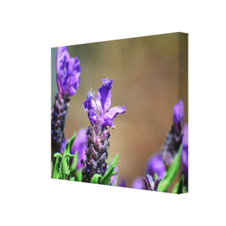 Lavender in flowering canvas print