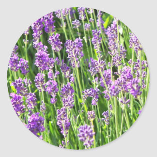 Lavender in the Grass Classic Round Sticker