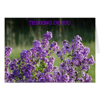 Lavender Phlox, Thinking of You Card