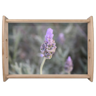 Lavender Photograph Soft and Pretty Serving Tray