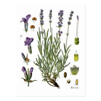 Lavender Post Card