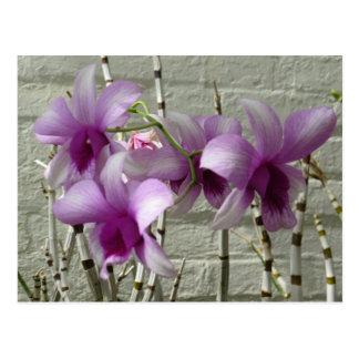 Lavender Purple Orchid Flowers Postcard