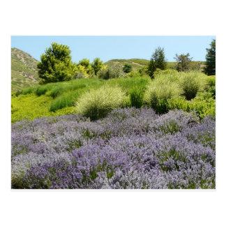 lavender scenery postcard