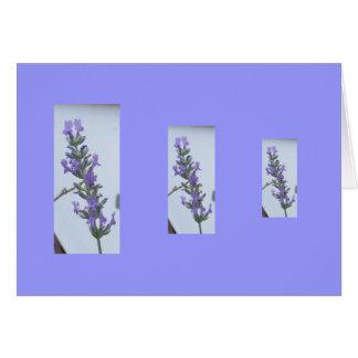 Lavender Spikes Card