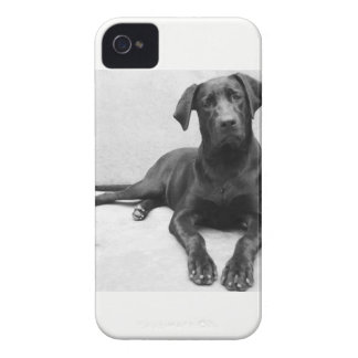 Layer iPhone 4 Labrador iPhone 4 Case