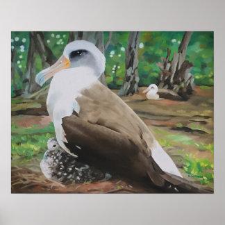 Laysan Albatross and Chick Poster