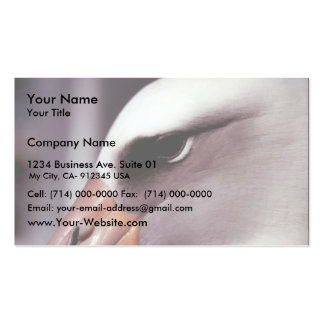 Laysan Albatross Close Up Head Shot Business Card Template