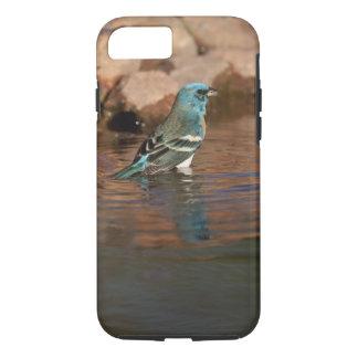 Lazuli Bunting (Passerina amoena) bathing in iPhone 7 Case
