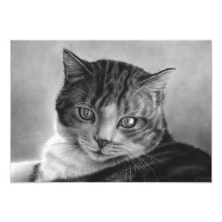 Lazy Afternoons Cat Photo Print
