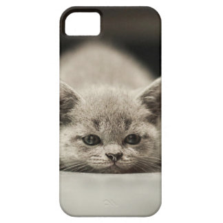 Lazy cat theme marries iPhone 5 case