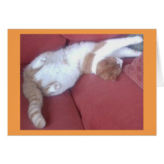 Lazy Cats 2 Photo Greeting Card - Cat Naps