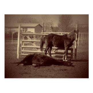 Lazy Horses Postcard