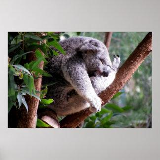 Lazy Koala Poster
