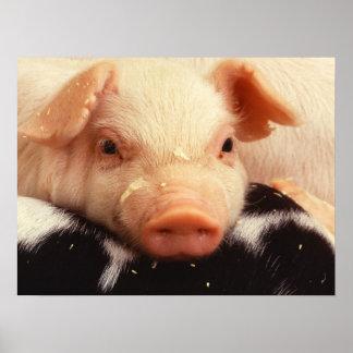 Lazy Piglet Poster