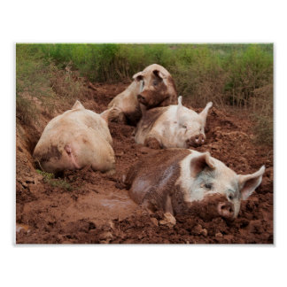 Lazy Pigs in Mud Poster