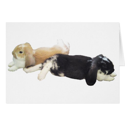 Lazy Rabbits - Bunnies Cute Sleepy Tired Weekend Greeting Cards