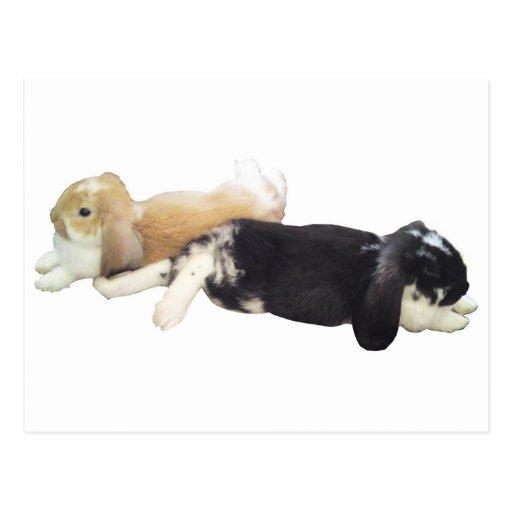 Lazy Rabbits - Bunnies Cute Sleepy Tired Weekend Postcard