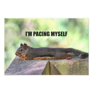 Lazy Squirrel Photo
