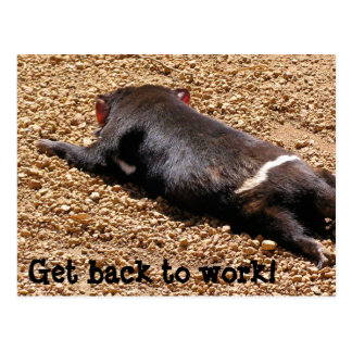 Lazy Tassie Devil Postcard
