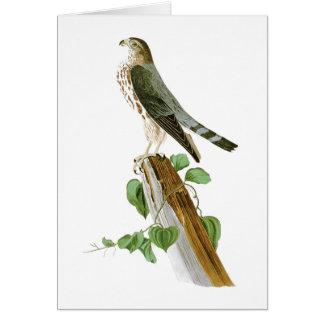 Le Petit Caporal John Audubon Birds of America Card