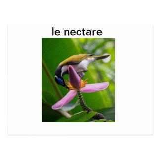 le rêve de la nature postcard